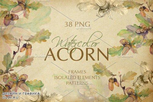 Acorn Watercolor png - 3905552
