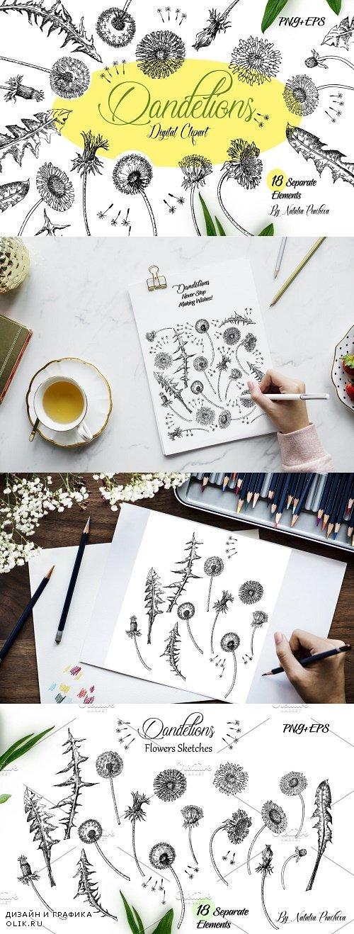 Dandelions Sketches Clipart - 3907787