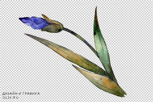 Eurobuket Irises blue watercolor png - 3916862