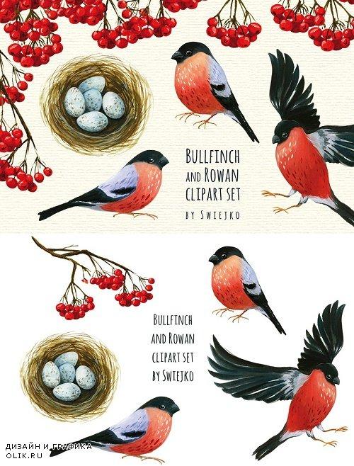 Bullfinch and Rowan clipart - 367110