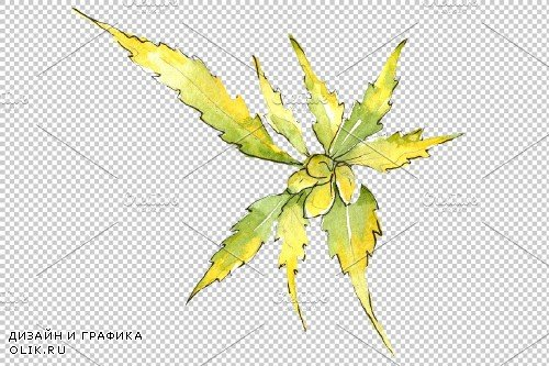 Cannabis Watercolor png - 3942990