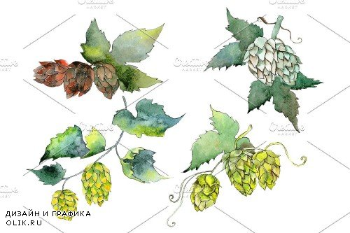 Hops Watercolor png - 3935424