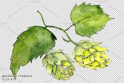 Hops plant Watercolor png - 3935451