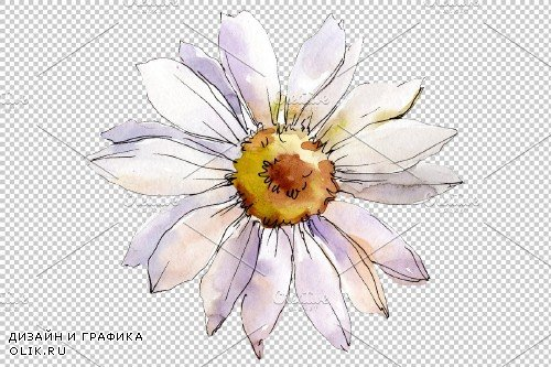 Daisy white watercolor png - 3935353
