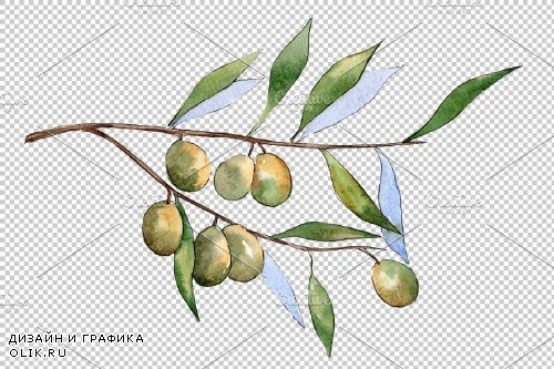 Branch olive watercolor png - 3935634