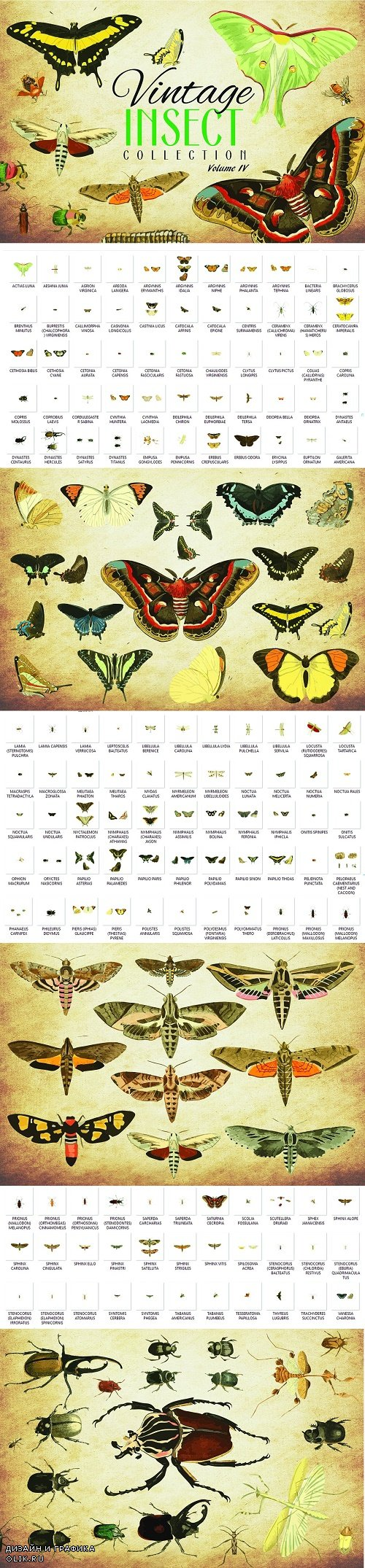 154 Vintage Insect Vector Graphics 4 - 3502662