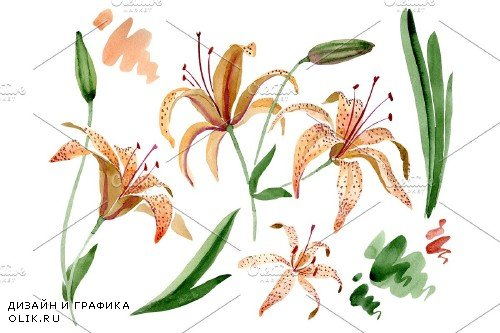 Orange lily watercolor png - 3958922