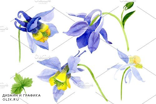 Aquilegia violet watercolor png - 3959149