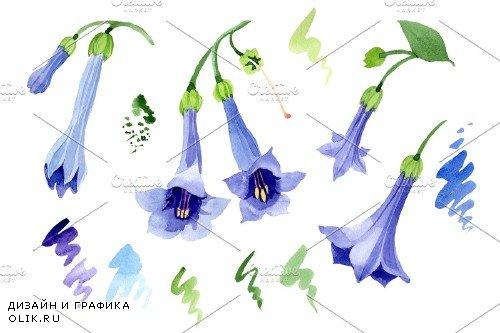 Brugmansia blue Watercolor png - 3967072