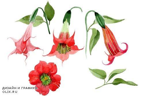Brugmansia red flower Watercolor png - 3983836