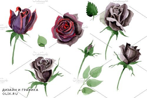 Black Rose flower Watercolor png - 3984529