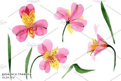 Astrometry pink flower watercolor - 3983935