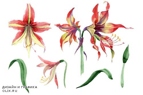 Hippeastrum red and yellow flower - 3983897