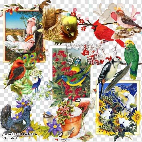 Разные птицы - клипарт PNG