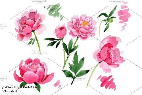Raspberry red peonies flower - 3991668