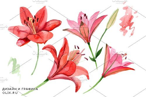 Red lily flower watercolor png - 3988103