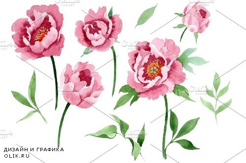 Dark red peony flower Watercolor png - 3988018