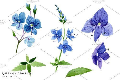Veronica flower blue Watercolor png - 3988085