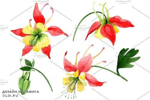 Red aquilegia flower watercolor png - 3988096