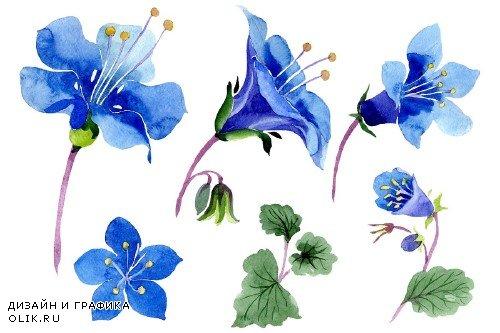 Phacelia bellflowerа blue flower - 3988066