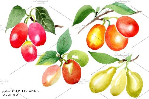 Yellow dogwood Watercolor png - 3991711