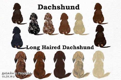 Dogs Clipart,Dog breeds Pet clipart - 3993651