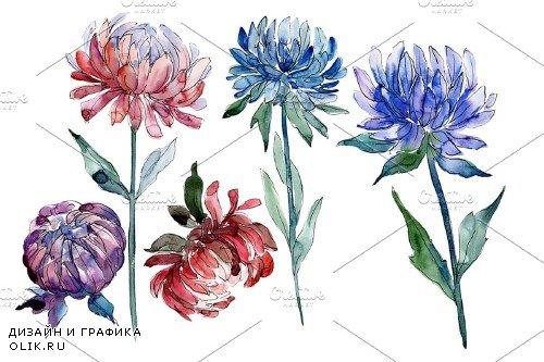 Aster flowers Strength of feelings - 4005049
