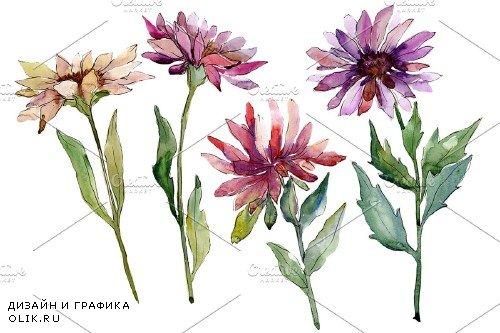 Flower Asters Watercolor png - 4005017