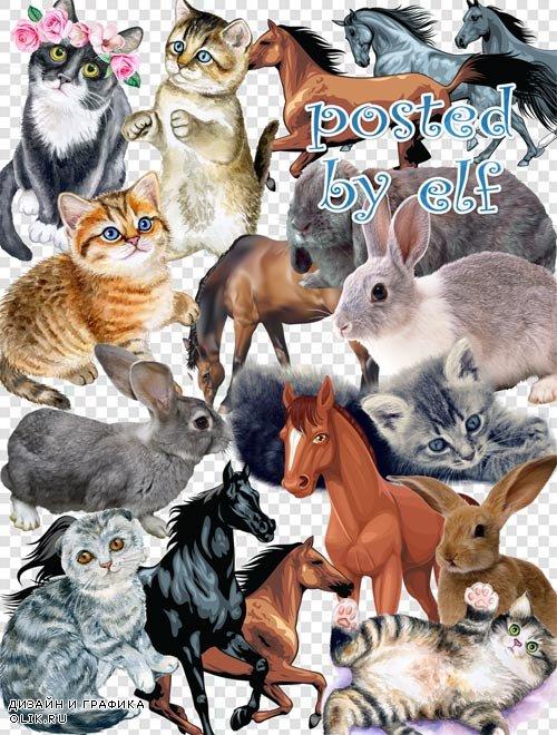 PNG клипарт - Зайцы, кошки, лошади