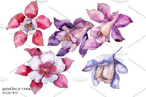 Aquilegia red flower Watercolor png - 4000970