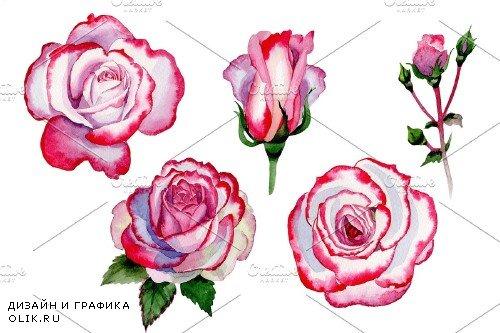 Pink rose good morning watercolor - 4027524
