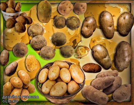 Прозрачные картинки для фотошопа - Картошка