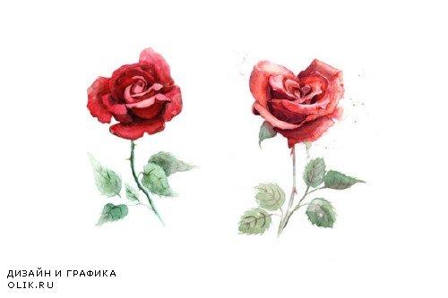 5 watercolor roses 53256