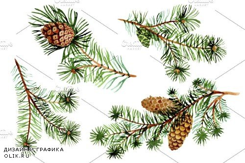 Evergreen with buds watercolor PNG - 4135664