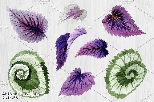 Decorative begonia purple watercolor - 4160583