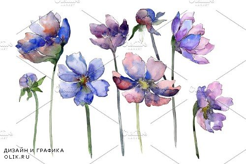 Cosmos flower blue Watercolor png - 4008839