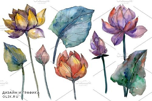 Lotus flower Watercolor png - 4010255