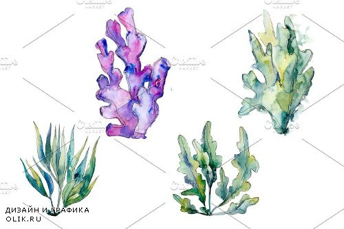Coral acabaria watercolor png - 4008702