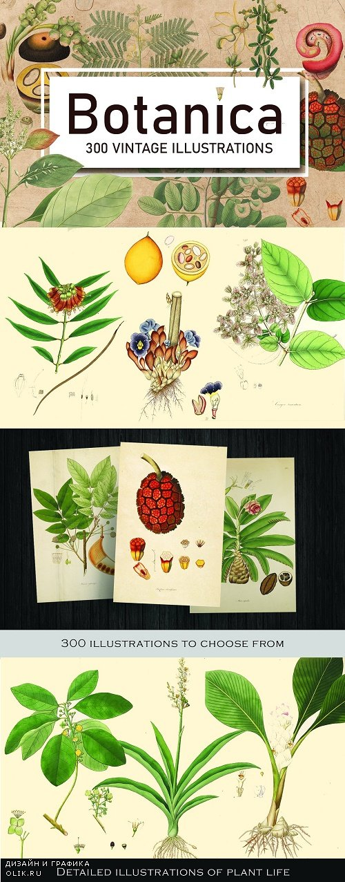 300 Vintage Botanical Illustrations - 4247680