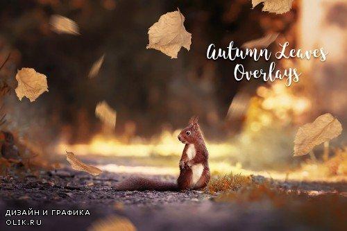 Autumn Leaves Overlays - 4189267