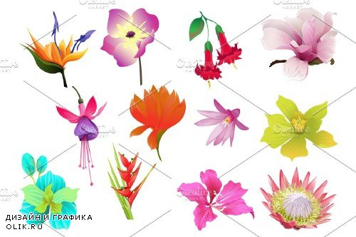 Flowers Tropical Illustration Pack - 4290669