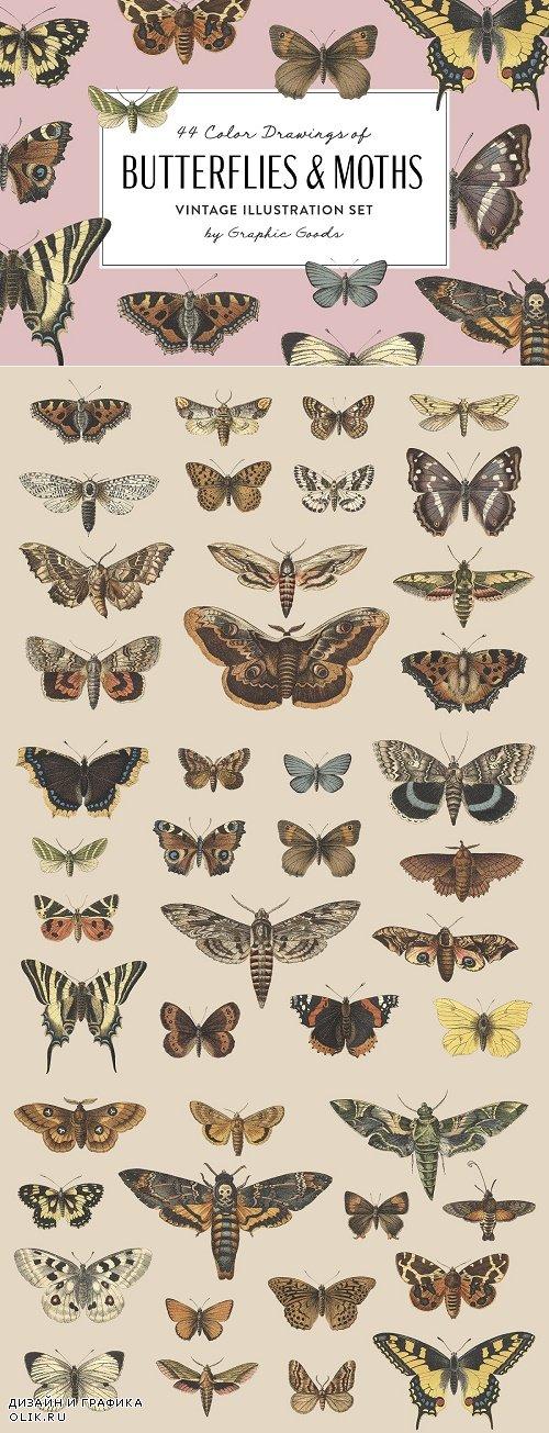 Butterflies & Moths Vintage Graphics - 4032650