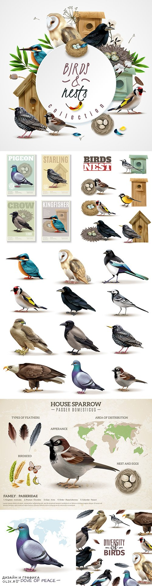 Birds set colorful birds different kinds realistic illustrations