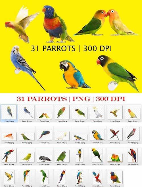 Parrots Clipart PNG Files - 4135230