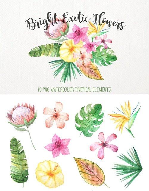 Watercolor Exotic Flowers Mini Set - 1605755