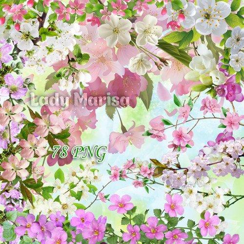 Клипарт на прозрачном фоне - Цветущие веточки деревьев