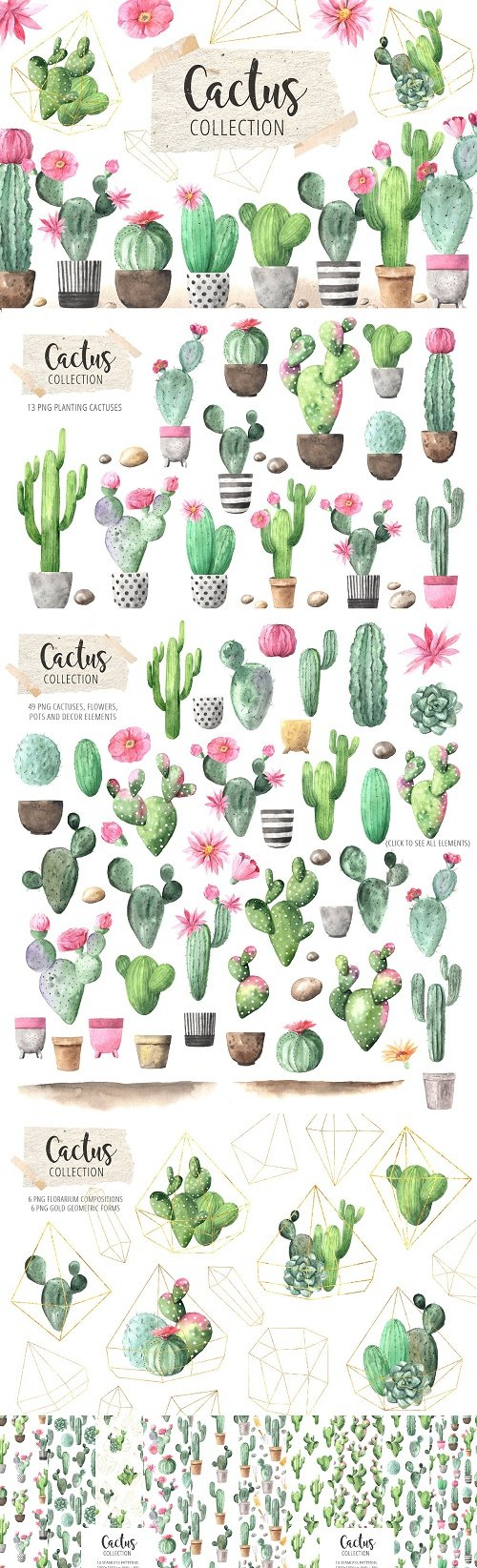 Watercolor Exotic Cactus Collection - 3330036