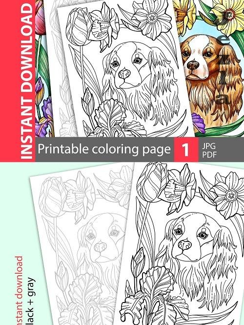 Cavalier King Charles. Coloring page - 4765332