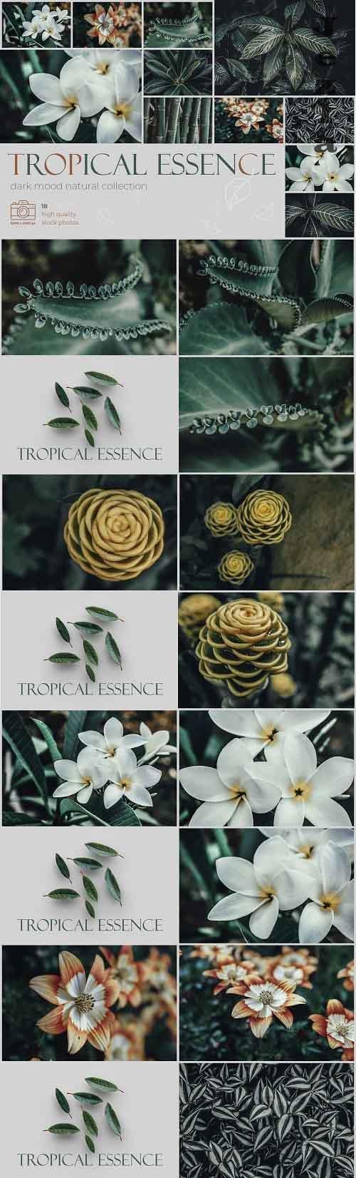 Tropical Essence. Photo bundle - 4868748