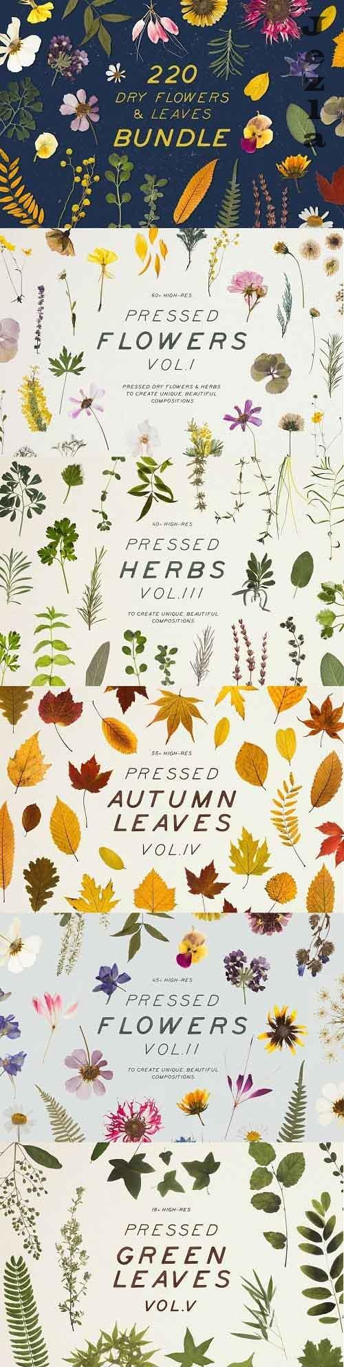 Bundle - Dry Flowers & Leaves 4592866